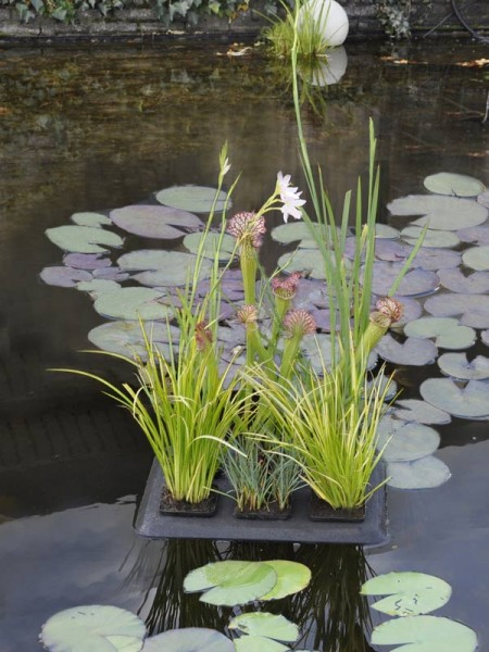 Floating Plant Oasis